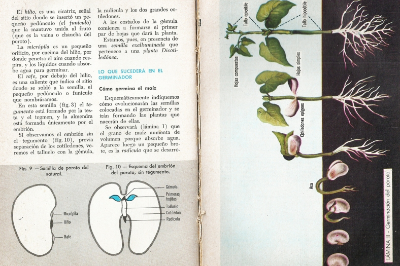 Segunda página