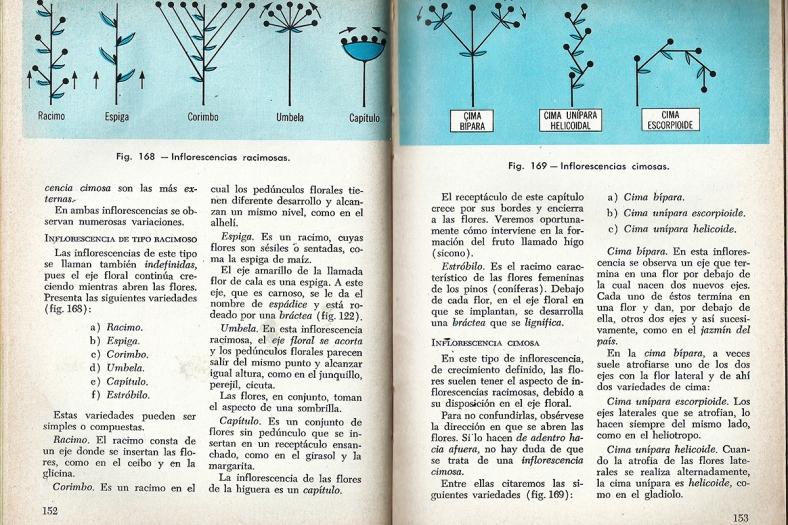 Novena página