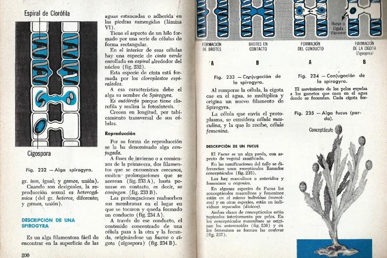 Décimo cuarta página