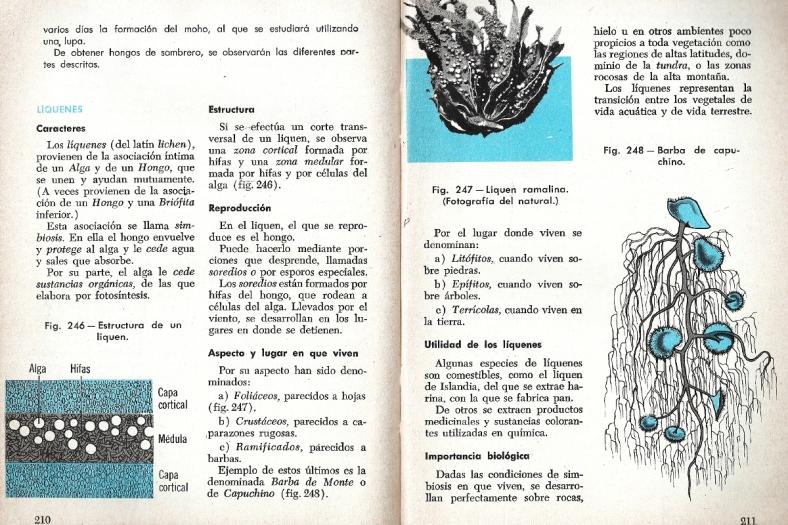 Décimo sexta página