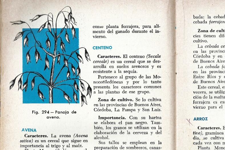 Décimo octava página