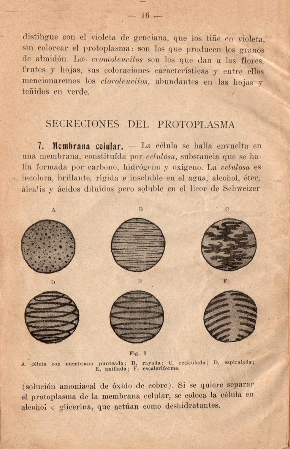 Atractivo Hoja De La Membrana Celular Foto - hojas de trabajo ...